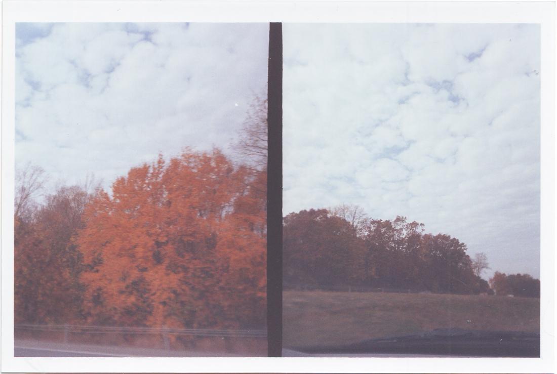treesbig